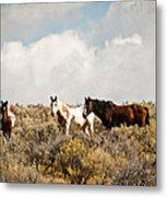 Steens Wild Horses Metal Print