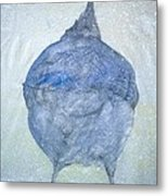 Stellar Jay From  Back Metal Print by Debbi Saccomanno Chan