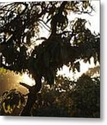 Stem And Leaves Outlined By The Shine Of Sunrays Metal Print