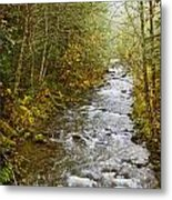 Still Creek Metal Print