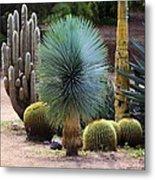 Still Life With Cactus Metal Print
