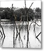 Stomps Of Trees In A Lake Metal Print