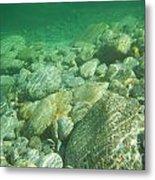 Stones Under The Water Metal Print