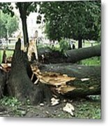 Storm Damage Metal Print