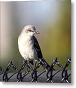 Straddling The Fence Metal Print