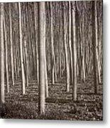 Straight Trees Metal Print
