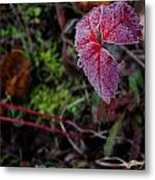 Strawberry Frost Metal Print