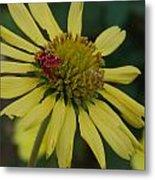 Strawberry Moth On A Yellow Flower Metal Print