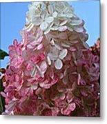 Strawberry Vanilla Hydrangea Metal Print