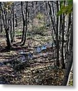 Stream In The Woods Metal Print