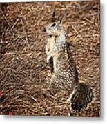 Strike A Squirrelly Pose Metal Print