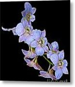 String Of Light Blue Orchids Metal Print