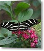 Striped Butterfly Metal Print
