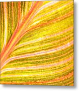 Striped Leaf Metal Print by Bonnie Bruno