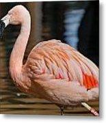 Strolling Flamingo Metal Print