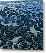 Stromatolites Metal Print by Dirk Wiersma