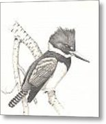 study for Belted Kingfisher painting Metal Print
