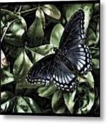 Subdued Butterfly Metal Print