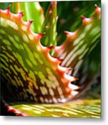 Succulents With Spines Metal Print