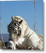 Such Strength And Beauty Metal Print