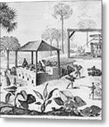 Sugar Production In The West Indies Metal Print