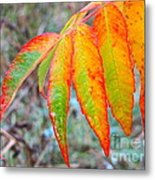 Sumac Leaves After The Rainfall Metal Print