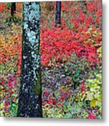 Sumac Slope And Lichen Covered Tree Metal Print