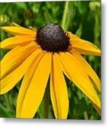 Summer Black Eyed Susan Flower Metal Print