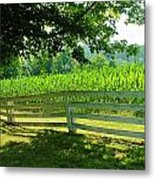 Summer Corn Metal Print