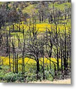 Summer Fields Of The Holy City Metal Print