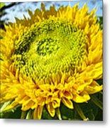 Summer Floral Art Prints Yellow Sunflower Metal Print