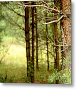 Summer Forest. Pine Trees Metal Print by Jenny Rainbow