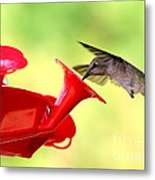 Summer Fun Hummingbird Metal Print