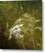 Summer Grasses Metal Print