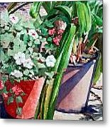 Summer Impatiens Metal Print by Peter Sit