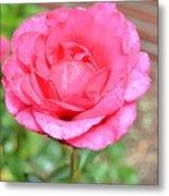 Summer Pink Rose Floral Metal Print