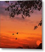 Summer Side Of Life Metal Print by Tom York Images