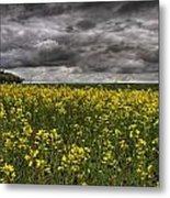 Summer Storm Clouds Over A Canola Field Metal Print