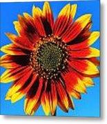 Summerflower Metal Print