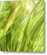 Summertime Green Metal Print by Ann Powell