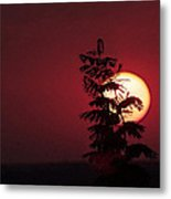 Sun And The Flower  Metal Print