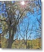 Sun And Trees - 4 Metal Print