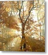 Sun Breaking Through Trees Metal Print
