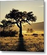Sun Coming Up Behind A Tree In African Metal Print