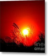 Sun Drop Metal Print by Laurence Oliver
