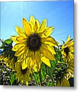 Sun Flower Metal Print