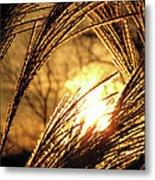 Sun In Grass Panoramic Metal Print