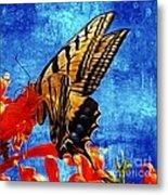 Sun Lit Eastern Tiger Swallowtail Metal Print