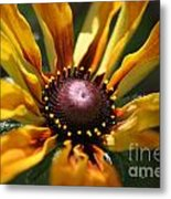 Sun On Flower Metal Print by David Taylor