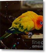 Sun Parrot Metal Print